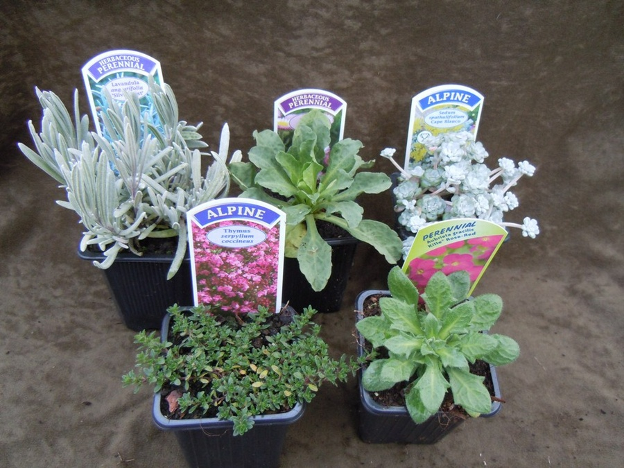 The Butterfly Collection-5 plants for bees and butterflies