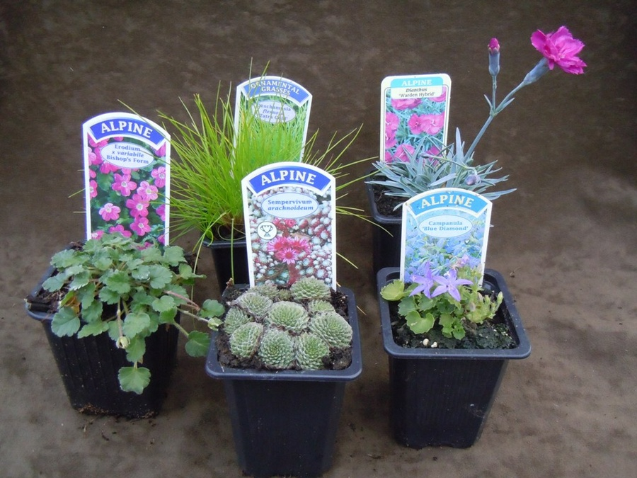 The Planted Tub Collection - 5 plants for pots and containers
